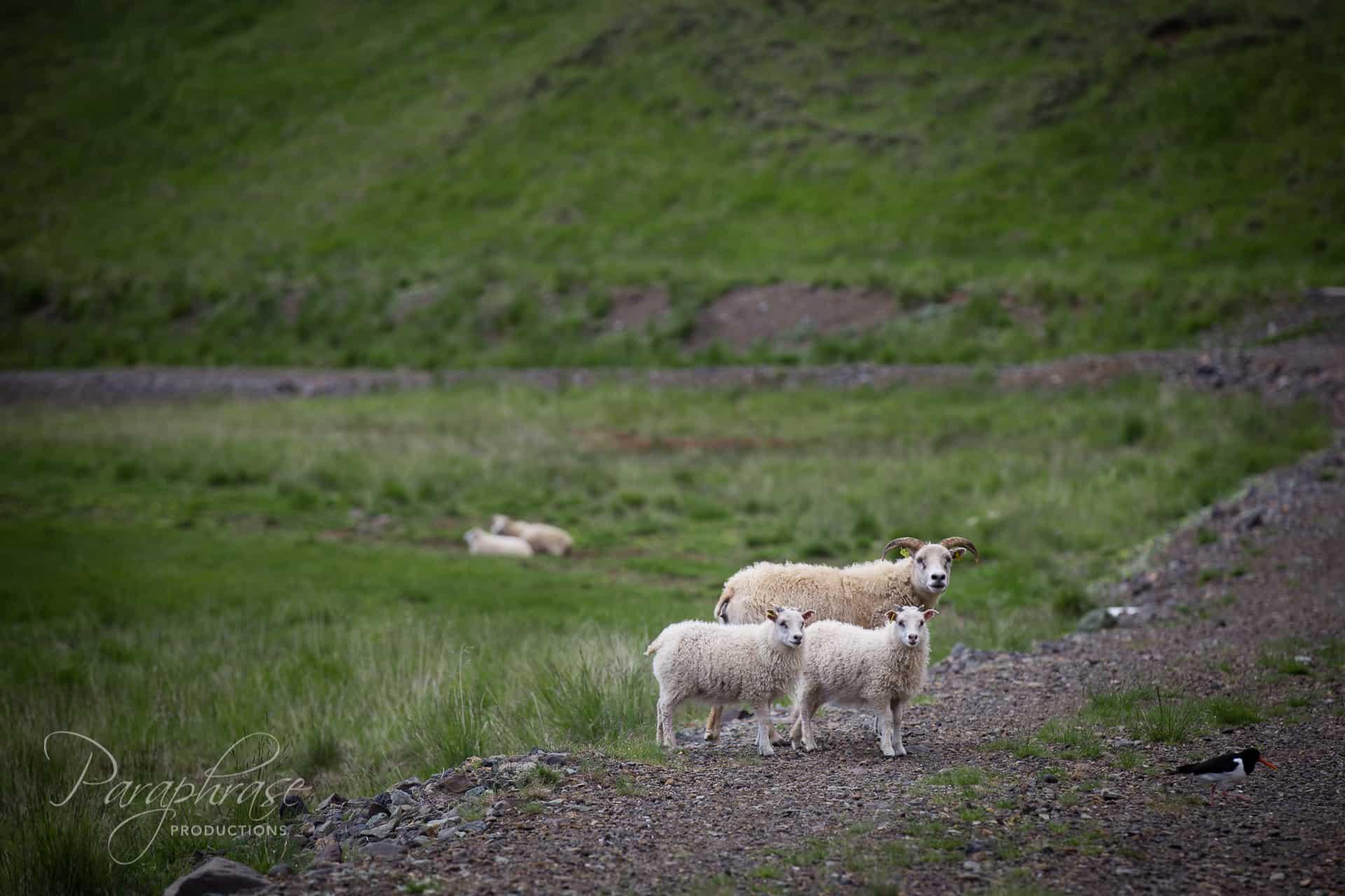 Iceland Days 1_2-16