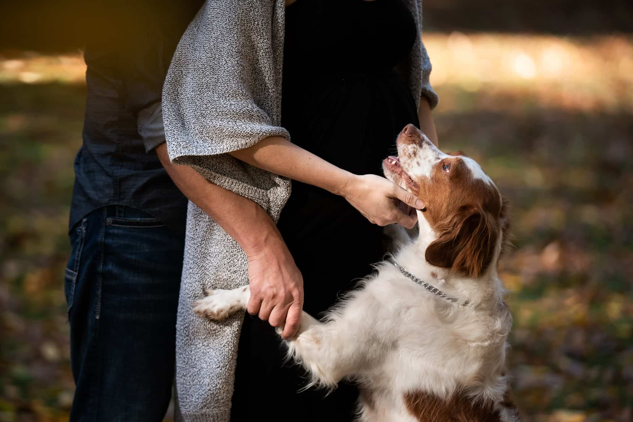 pregnant couple hugging their puppy