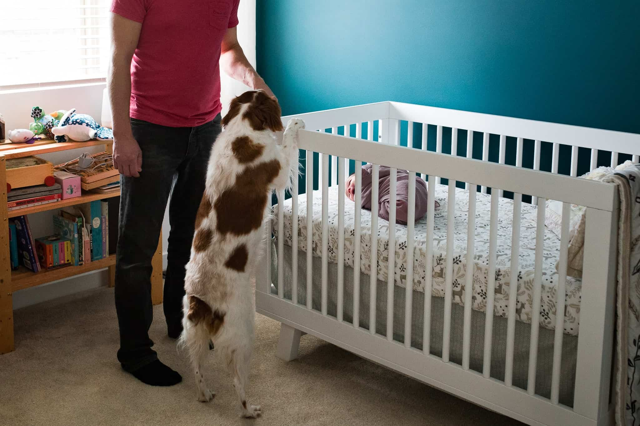 dog peeking into crib to look at newborn baby