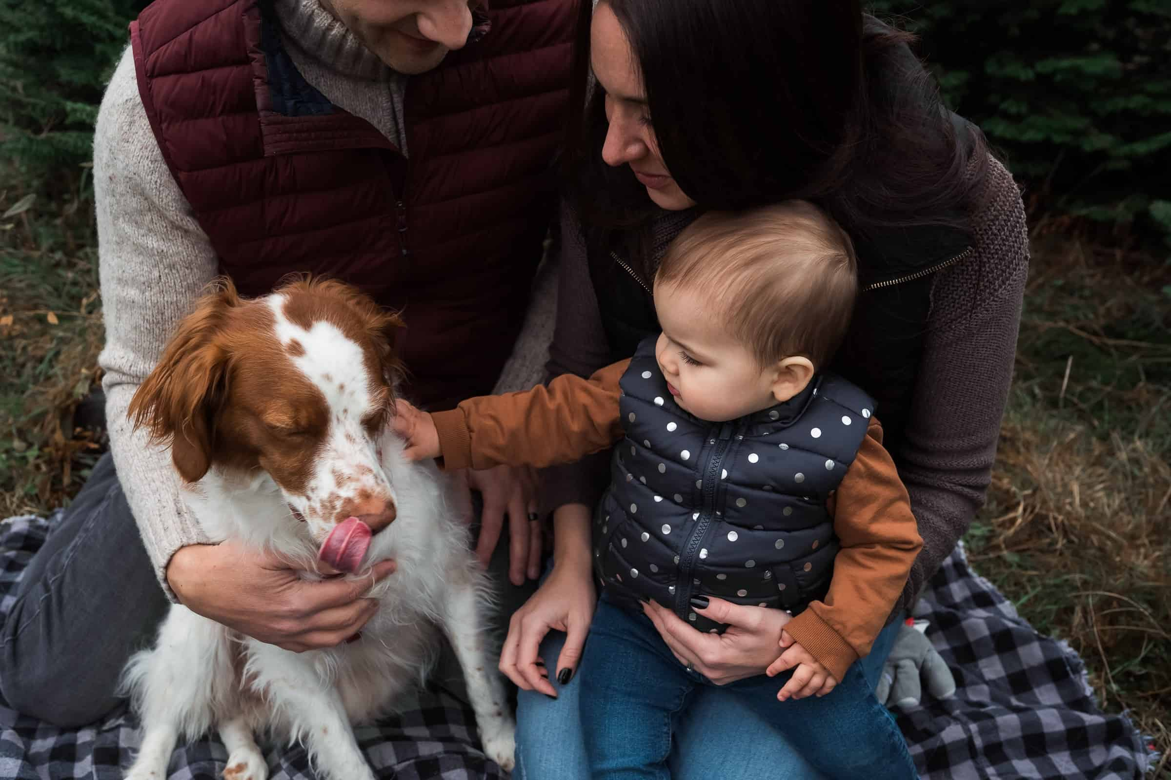 baby petting dog in parents' laps