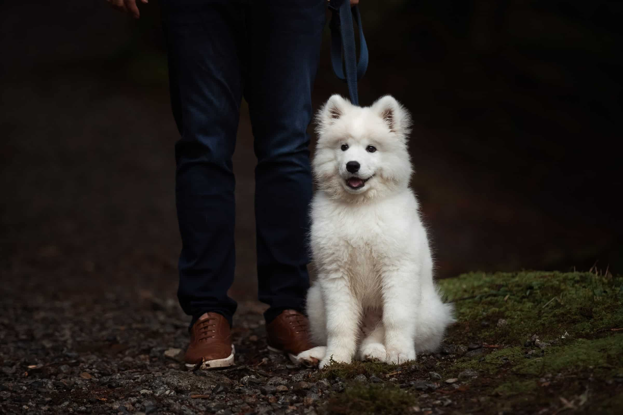 white fluffy dog sitting by his master