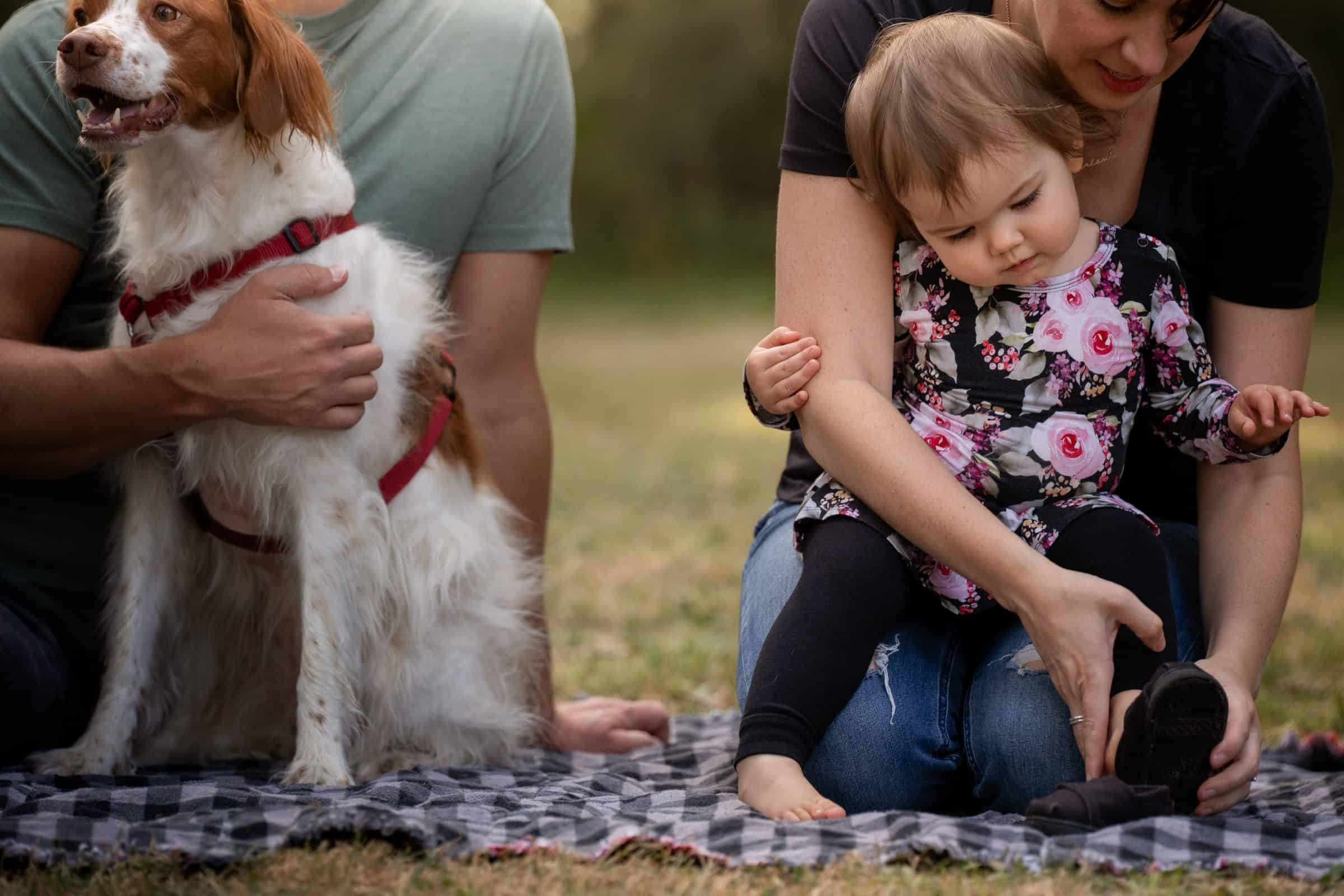 mom helping toddler to put on shoes while dad holds dog