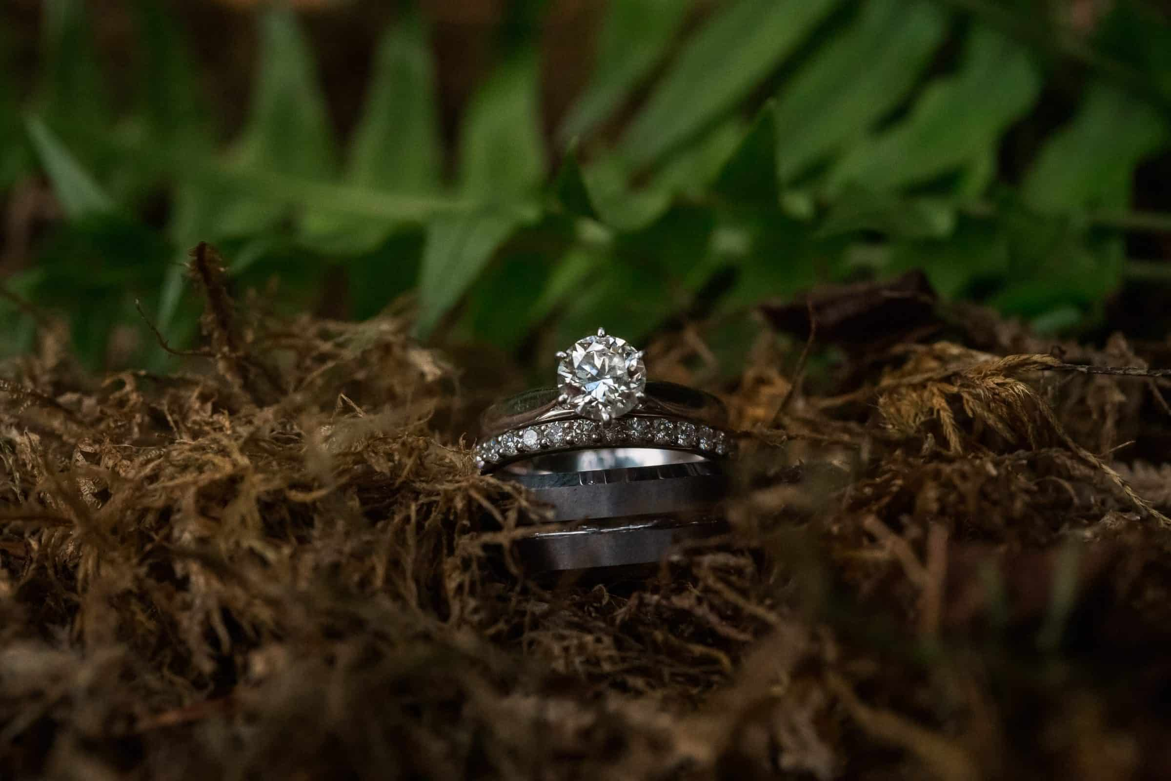 close up of ring shot with ferns in background