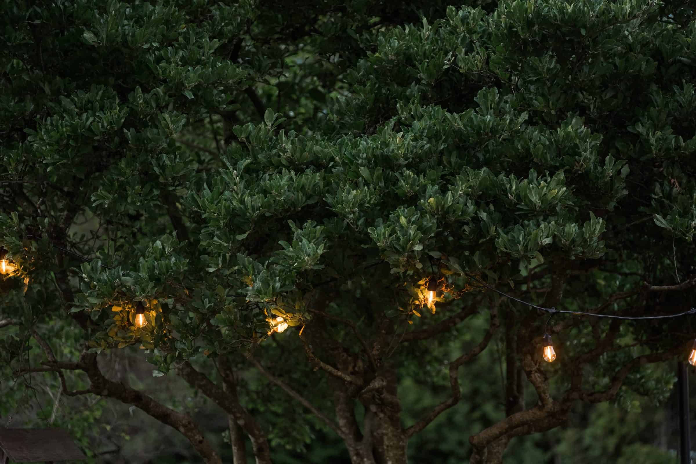 eddison lights strung up in trees